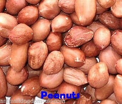 Grade 1 Peanuts for Wild Birds Aflatoxin Tested Safe for Birds 25kg