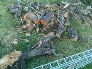 ******** Firewood for FREE FREE ******** Campbelltown Campbelltown Area Preview