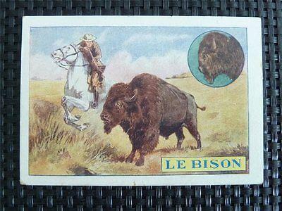 BISON WISENT BUFFALO HORSE SEHR ALTES SAMMELBILD c4086