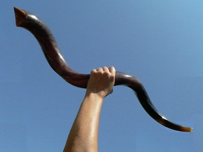 Small-Large Trumpet Horn Hebrew SHOFAR, Religious Jewish Kosher Holy Land Israel