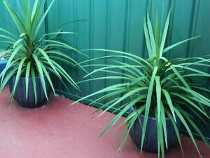 Outdoor Plants Ryde Ryde Area Preview