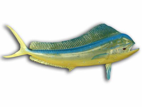 "42"" Bull Dolphin Half Fish Mount Replica (aka Mahi Mahi / Dorado) -10 Day"