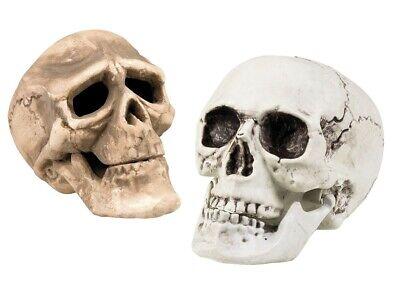 Deko-Totenkopf Toten-Schädel Halloween Dekoration Skull Bones Karneval Fasching