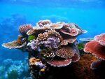 Coral Calcium Supreme