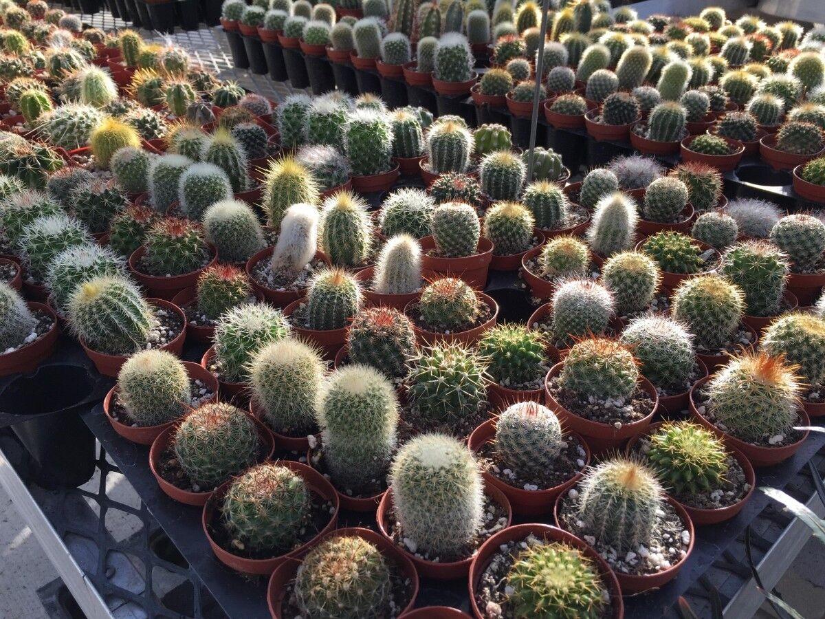 лестницы доме семена кактусов виды фото дневное время