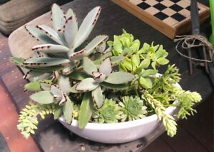 Variety of succulents in a white ceramic pot Elanora Gold Coast South Preview