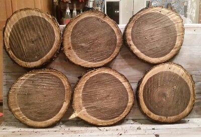 """LOT OF 6 Fresh Black Walnut Slabs Slice Tree Trunk 10"""" x 1"""" Rustic Wood"""