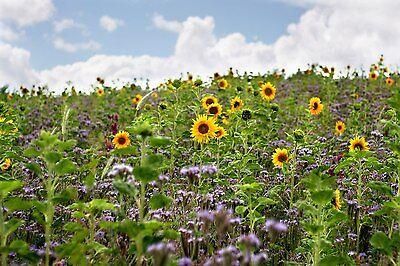 BIENENWEIDE 5 kg Saatgut Blühstreifen Bienenwiese Bienen-Mischung GREENING § 31