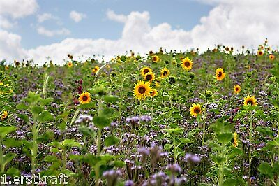 BIENENWEIDE 10 kg Blühstreifen BUNTE Bienenwiese Saatgut für Bienen GREENING §31
