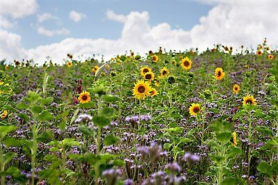 BIENENWEIDE 10 kg Saatgut Blühstreifen Bienenwiese Bienen-Mischung GREENING § 31