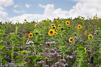 BIENENWEIDE 5 kg Saatgut Blühstreifen Bienenwiese BUNTE Mischung GREENING § 31