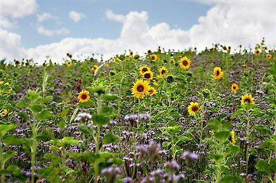 BIENENWEIDE 2,5 kg Saatgut Blühstreifen Bienenwiese BienenMischung GREENING § 31