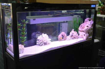 Massive New Aquarium Sale