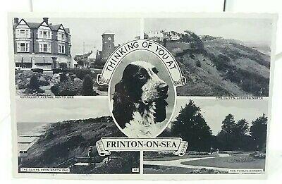 Vintage Multiview Postcard Frinton On Sea Springer Spaniel