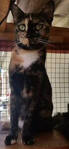 Olivia is waiting for her forever home Shalvey Blacktown Area Preview