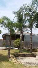 PALM TREES FOR SALE. MAKE AN OFFER!!! CARRUM DOWNS AREA. Carrum Downs Frankston Area Preview