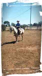 Palomino pony 13.3 for quick sale Little Mountain Caloundra Area Preview