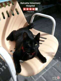 Lost or missing SMALL BLACK CAT
