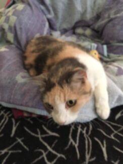 MISSING/ LOST CAT