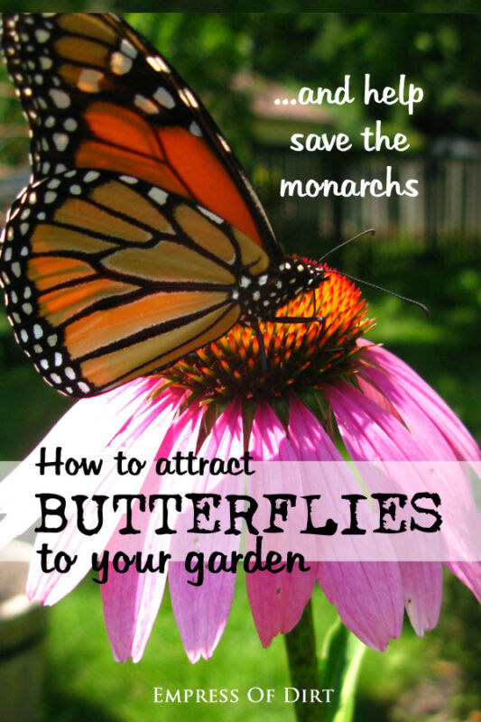 How to attract butterflies to your gaden and help save the monarchs