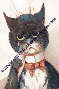 rp13524 - Louis Wain Cat - photo 6x4