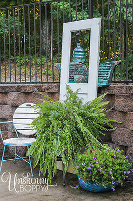 Shade Plants: Boston Fern