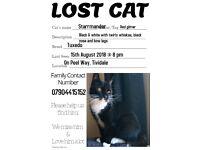 Missing Cat: Starmander