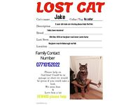 Missing cat please help