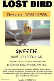 Missing cockatiel, Norwich