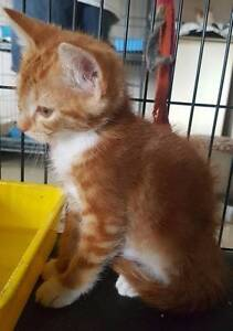 Walter is looking for his forever home Shalvey Blacktown Area Preview