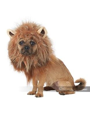 King Of The Jungle Löwe Hund Haustier Halloween Kostüm (Löwe-hund Kostüme)