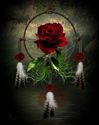 Native American Dream Catcher Rose Beautiful 8.5x11 Matte Art (Native American Dreams)