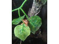 Adorable Hatchling Crested Geckos