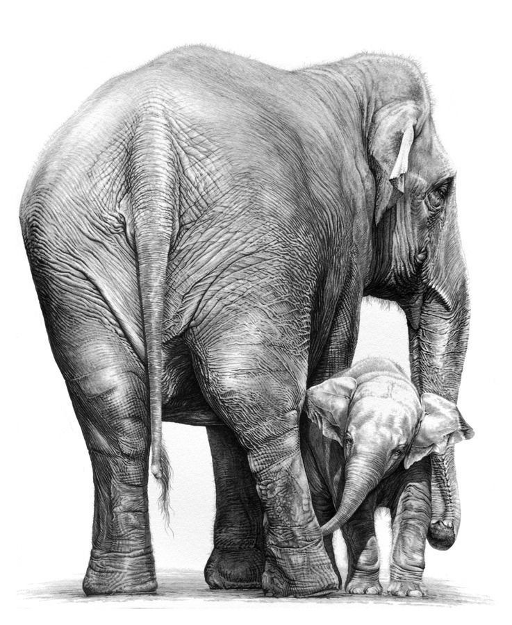 Gary Hodges Indian Elephants Original Print Limited