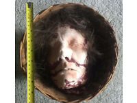Professionally Hand-Made Halloween Horror Prop - Severed Head In A Wicker Basket