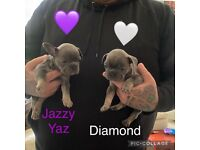 2 french bulldog girls looking for there forever home ready 15/7/21