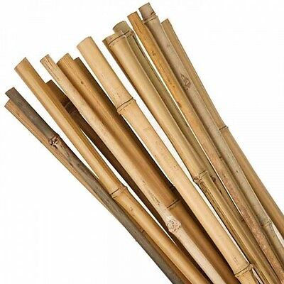 50 X 7FT  BAMBOO Canes Tonkin Quality STRONG NEW Garden Plant Support 12 x 14mm