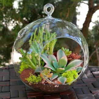 TERRARIUMS & MIXED PLANTERS FOR SALE