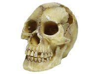 Repstyle Skull Human 12 x 18 x 13cm