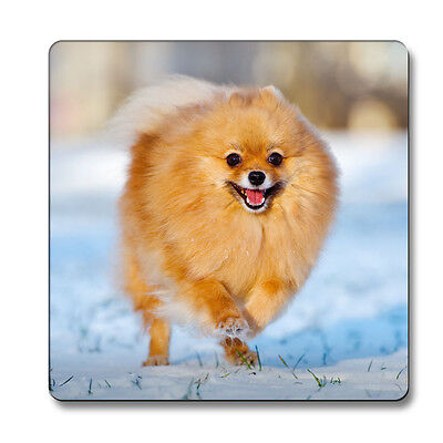 Pomeranian Dog Magnet animal lover gift idea party fridge kitchen puppies](Puppy Party Ideas)