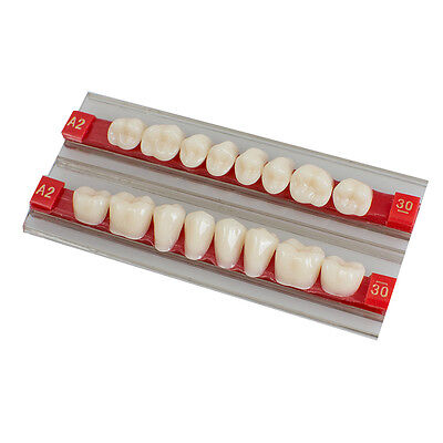 Posterior Back Acrylic Resin Denture Dental Teeth Shade G30 A2 A3 High Quality