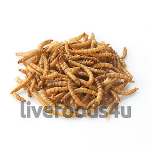 live regular mealworms bulk bag 500g free delivery livefood reptiles birds
