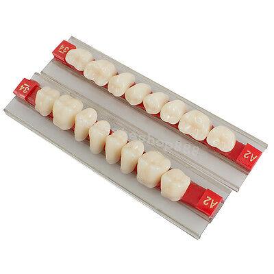 G34 A2 Posterior Teeth Acrylic Synthetic Resin Denture Dental Teeth Shade Molar