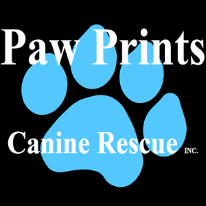 Become a foster carer! -Paw Prints Canine Rescue Logan Central Logan Area Preview