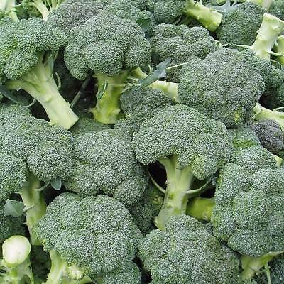 500 WALTHAM 29 BROCCOLI 2018 (all non-gmo heirloom vegetable seeds!)
