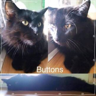 Buttons is looking for his furever home