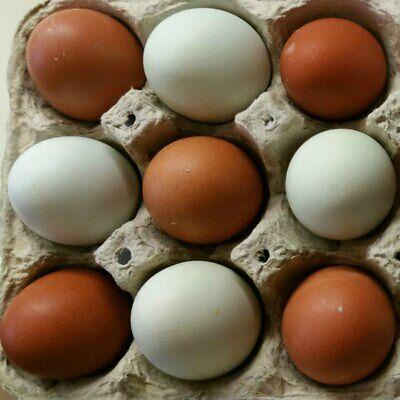 12 Fertile Hatching Barnyard Special Chicken Eggs