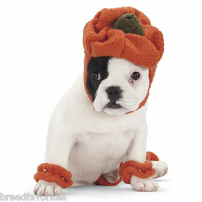 Halloween Pumpkin Dog Costume by Hugglehounds Sizes XS-SM-MD-LG