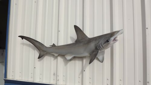 """48"""" Hammerhead Shark Two Sided Shark Mount Replica - 10 Business Day Production"""