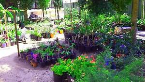 LOTS OF PLANTS FOR SALE FROM $2 Marsden Logan Area Preview